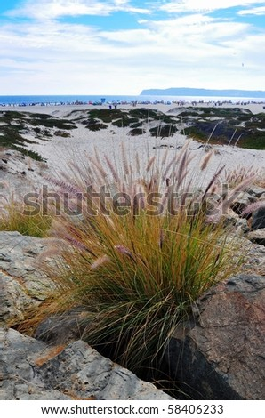 Fountain grasses with ocean in the distance. - stock photo