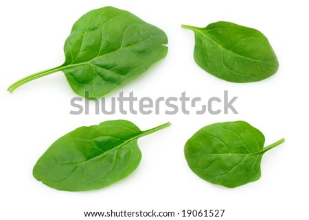 Four baby spinach leaves in isolated white background