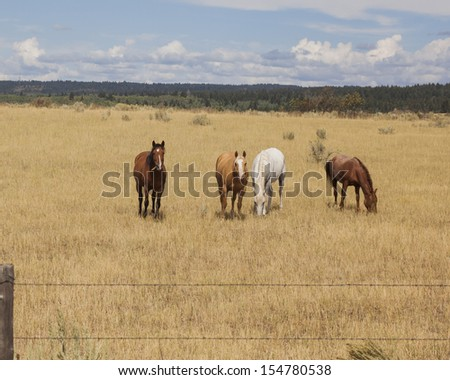 Four beautiful horses photographed near the Henry's fork river in east Idaho. - stock photo