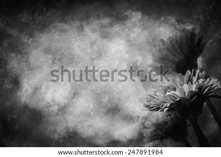 Four beautiful red gerbera . Retro aged photo with scratches. Black and white. - stock photo