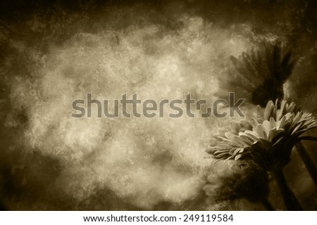 Four beautiful red gerbera . Retro aged photo with scratches. Sepia. - stock photo