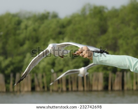 Four bite of food to feed the seagulls - stock photo