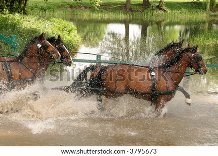 four brown racehorses running through water - stock photo