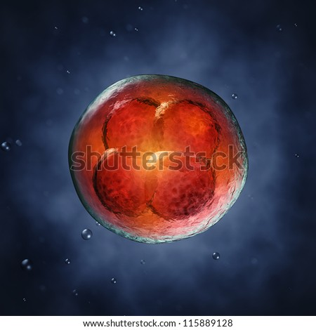 Four-cell embryo  , 3d illustration - stock photo