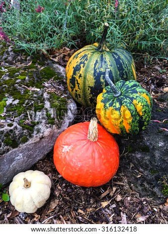 Four colorful pumpkins decorating an autumn garden. - stock photo