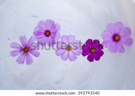 four cosmos flower on water - stock photo