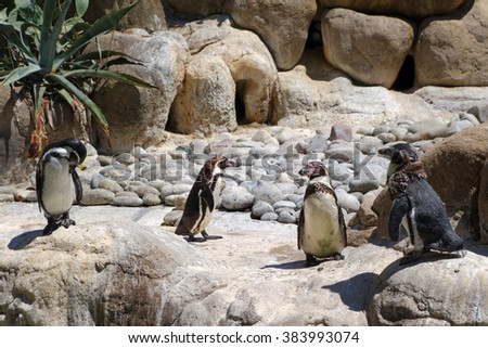 Four cute penguins on rocks at the zoo in Barcelona, Spain