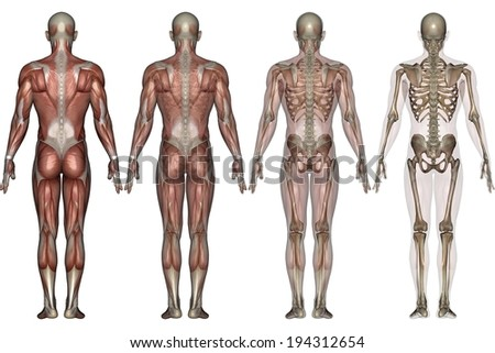 Four different people with different body systems highlighted - stock photo