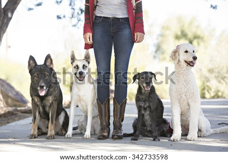 Four dogs with owners legs  - stock photo