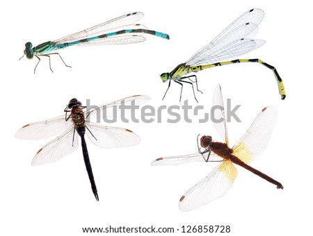 four dragonflies isolated on white background - stock photo