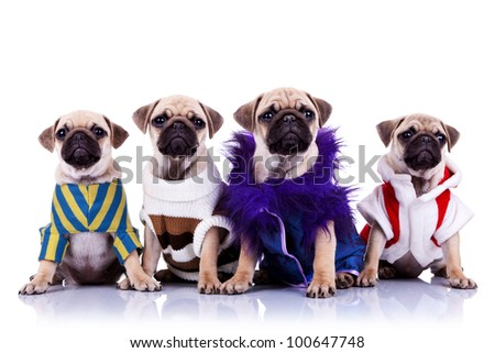 four dressed mops puppy dogs sitting on a white background and looking to the camera - stock photo