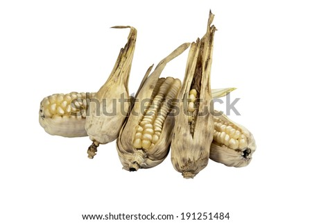 four dried ears of corn from failed crop - stock photo