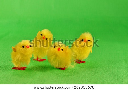 Four Easter chicks   /  Four yellow, fluffy Easter chicks on the green background .