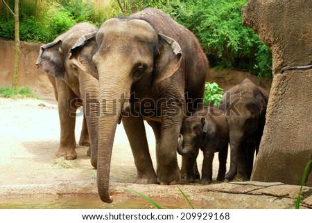 Four Elephants Posing for a Family Portrait at the St. Louis Zoo in Forest Park - stock photo