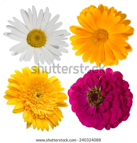 Four flower isolated on white background.
