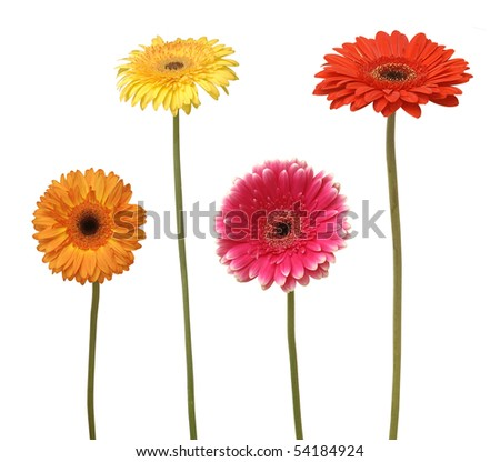 four flowers isolated on white - stock photo