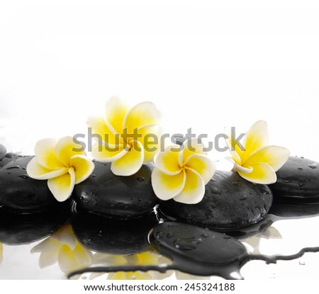 Four frangipani and black stones on wet - stock photo