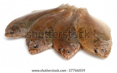 Four fresh flounder fishes on white background - stock photo