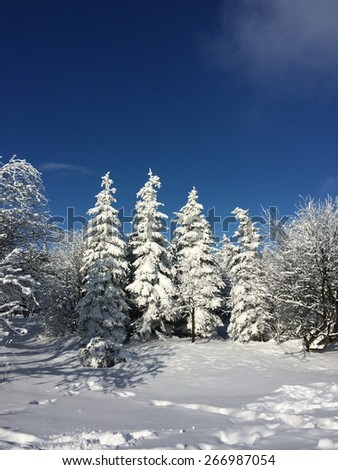 Four frozen trees covered with snow