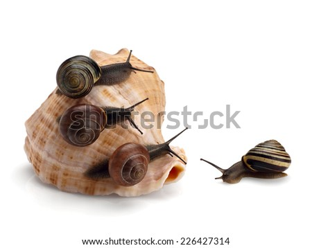 Four garden snails and sea cockleshell