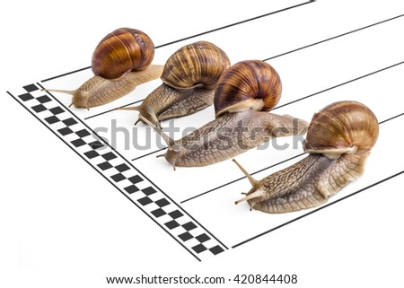 Four garden snails (Helix aspersa) approaching the finish line on the running track on white background. Teamwork concept, competition. - stock photo