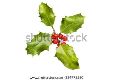 Four Holly leaves with ripe red berries isolated against white - stock photo