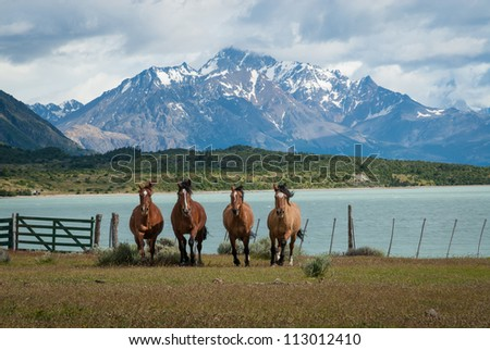 Four horses galloping in Patagonia in front of a glacier lake and mountains - stock photo