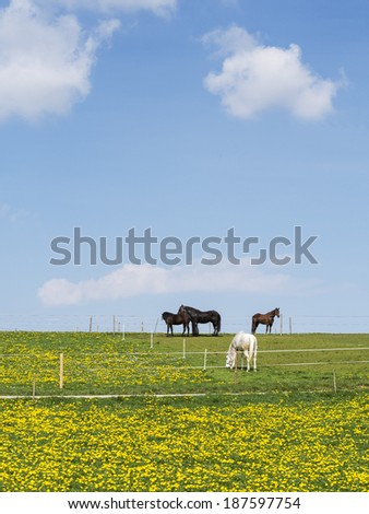 Four horses on a meadow with blue sky and white clouds