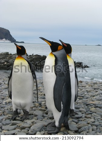 Four king penguins - stock photo