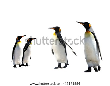 four king penguins isolated on white background - stock photo