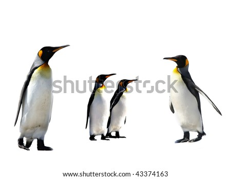 Four King Penguins Isolated on White Background - stock photo