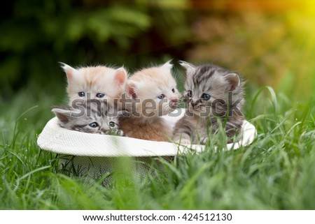 four kittens in ????? to a hat on a grass