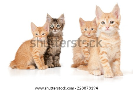 Four kittens on a white isolated background look ahead