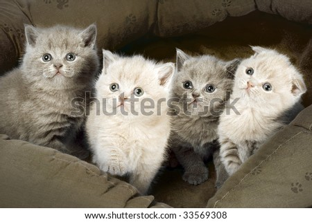 Four kittens sitting in basket together.