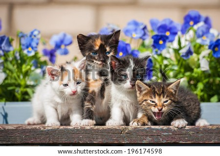 Four kittens sitting near the flowers - stock photo