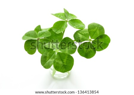 Four-leaf clover - stock photo