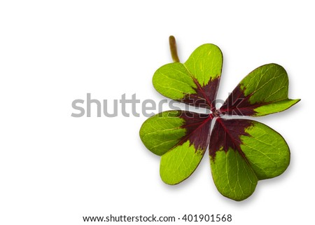 Four Leaf Clover isolated on white background - stock photo