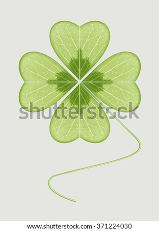 Four-leaf clover. The symbol of wealth, success and love. Happy plant. Geometric leaf green on a grey background.