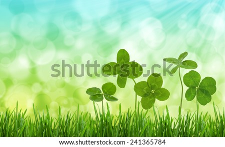 Four-leaf clovers in grass against blurred natural background. - stock photo