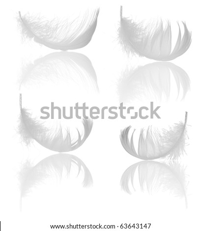 four light feathers isolated on white background - stock photo