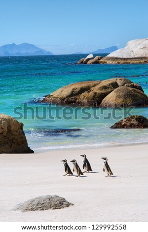 Four little penguins on beautiful beach. Shot in the Boulders Beach Nature Reserve, near Cape Town, Western Cape, South Africa. - stock photo