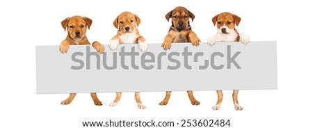 Four mixed Shepherd breed puppy dogs holding a blank sign to enter text onto - stock photo