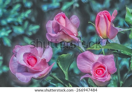 Four pink shrub roses, digital oil painting - stock photo