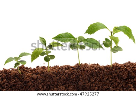 Four plants growing from soil - stock photo