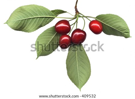 Four ripe cherries and leaves on pure white background
