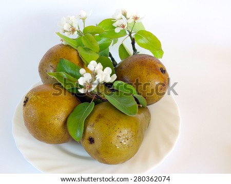 Four ripe dewy pears and branch with blossoms on white dish - stock photo