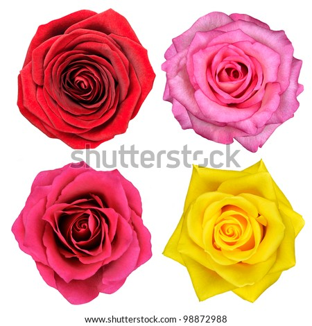 Four Rose Flowers Isolated on White Background - stock photo