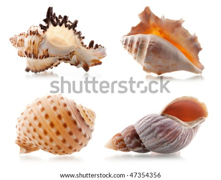 Four sea shells. Isolated on white background - stock photo
