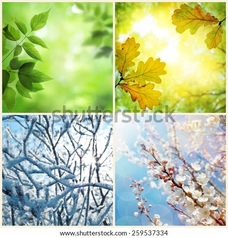 Four seasons. A pictures that shows four different pictures representing the four seasons: Spring, summer, autumn and winter - stock photo