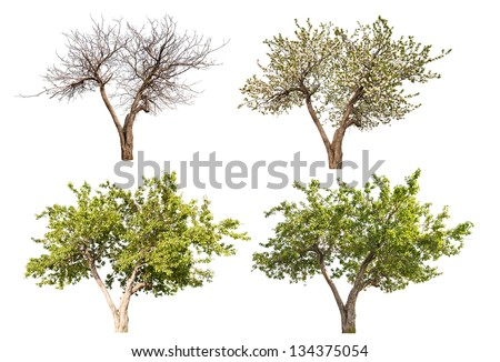 four seasons apple tree isolated on white background - stock photo